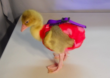 Dinah in Red Hearts Diaper Holder~2~ 2012-02-17